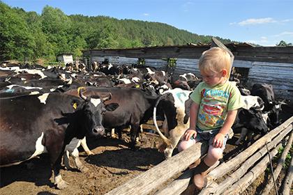 СМИ предупредили о кредитном коллапсе в сельском хозяйстве России