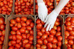 РФ и Турция подготовили решение о возможности поставок томатов с 1 ноября