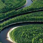 Россия потребовала от Китая компенсацию за вырубку сибирских лесов