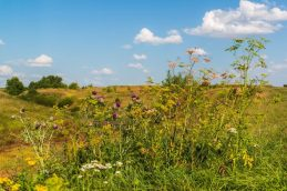 У собственников изъяли почти 3 тысячи га неиспользуемых сельхозземель